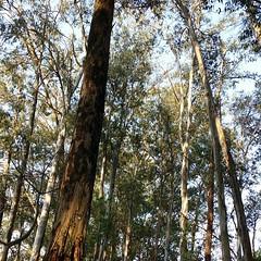 Caminho das árvores.