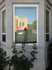 One Red Rose, Central District, Seattle