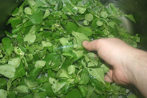 34 - Feldsalat waschen / Wash lamb's lettuce