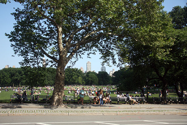All-the-people-in-central-park
