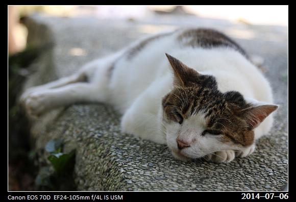 201400706_Cat_11