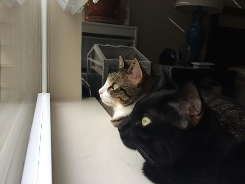 Amelia and Martha look out the window