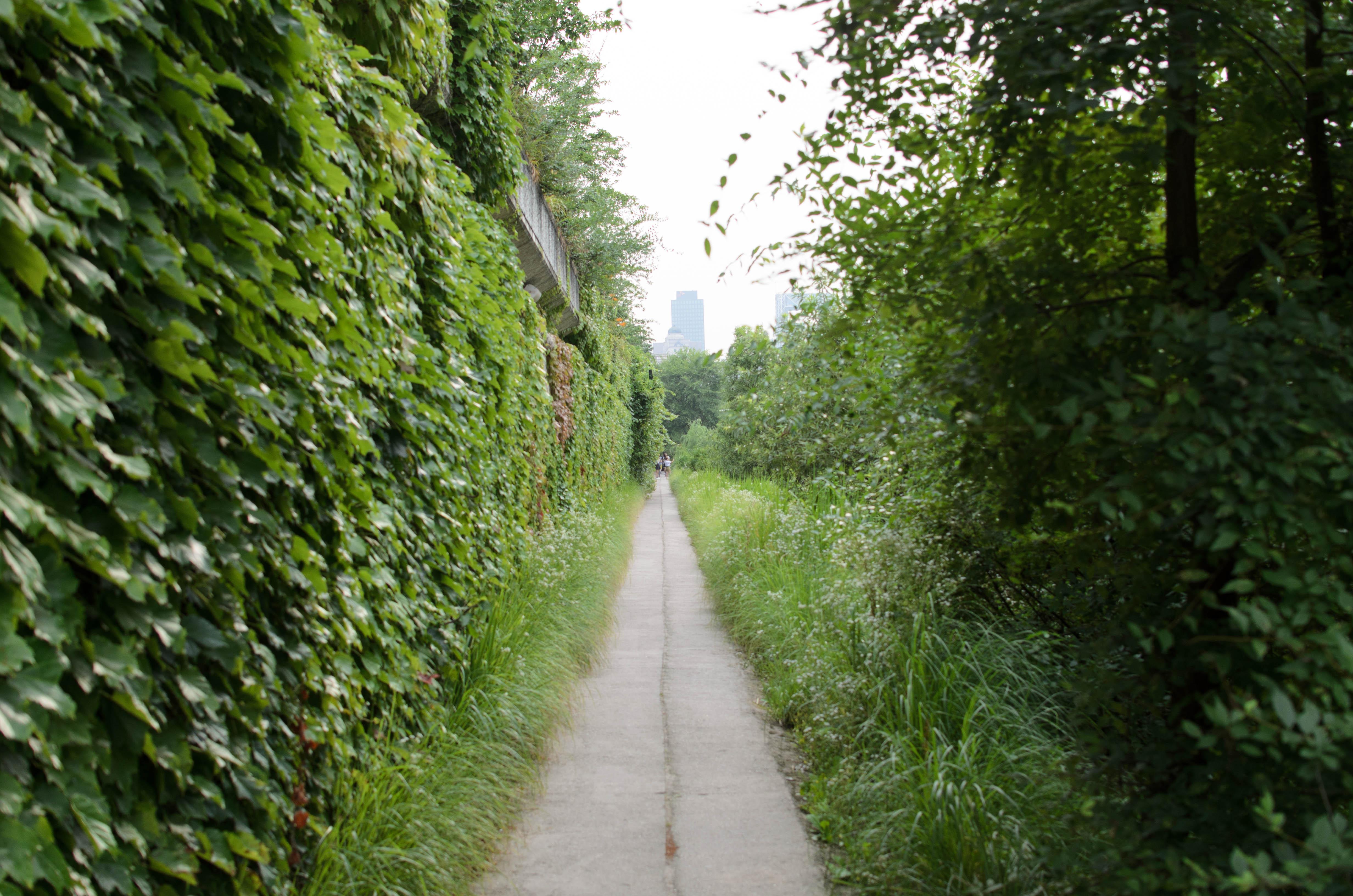 The secret garden path