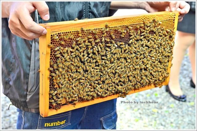 養蜂人家蜂采館006-DSC_6035