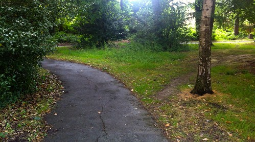 Desire path in the wood