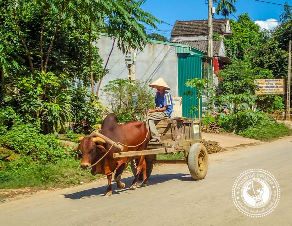 Ox Cart Vietnam