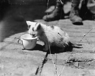 A kitten born in the trenches seeks nourishment / Un chaton né dans les tranchées cherche de la nourriture