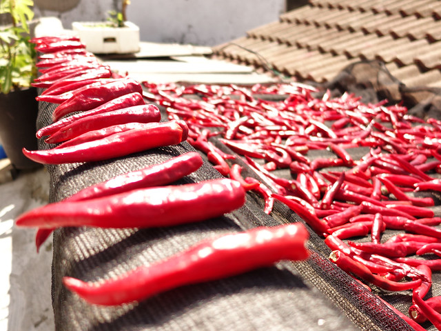 red peppers #red_pepper #red #pepper #RX100M2 #Dowon #Incheon #고추 #도원 #인천