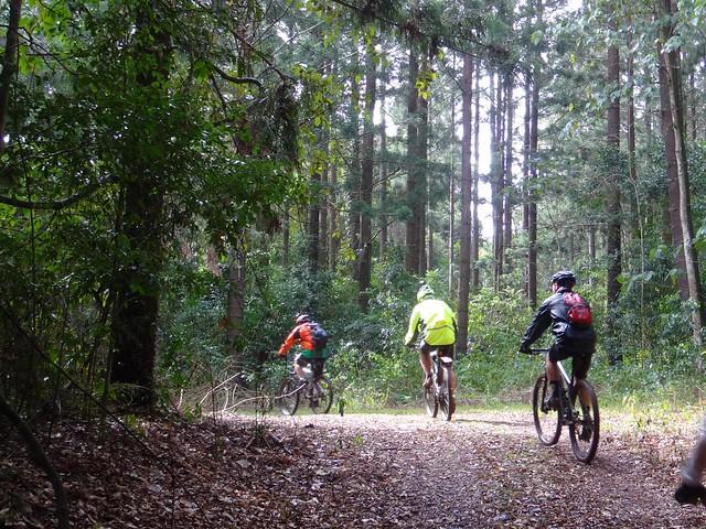 Palen Creek State Forest