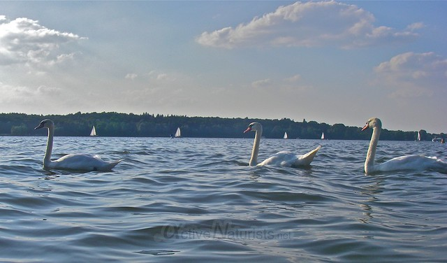 swan 0000 Wannsee, Berlin, Germany