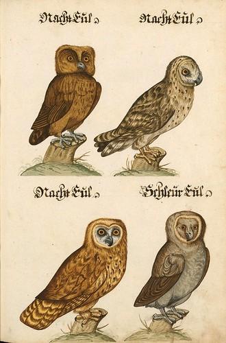 014-Aquarelle von Säugetieren…- e-manuscripta-Bibliothèque électronique suisse