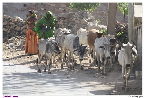 Inde - Ranakpur-Udaipur
