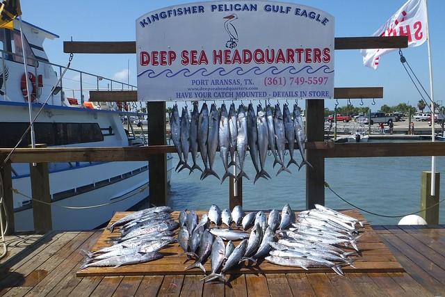 Deep sea fishing port aransas tx flickr photo sharing for Deep sea fishing corpus christi