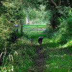 A country stroll