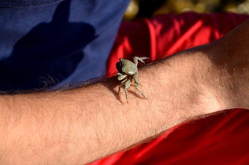 krabbe(lnd)