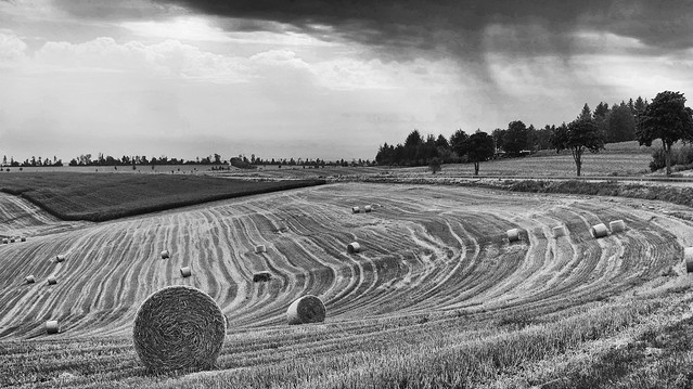 Rain coming - over harvested cornfields in the German Eifel region
