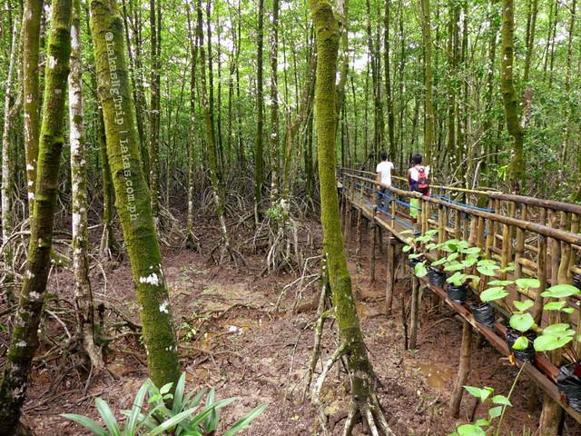Mangrove Eco Park, El Nido, Palawan, Philippines