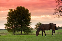 EQUUL Access - Horse Farm