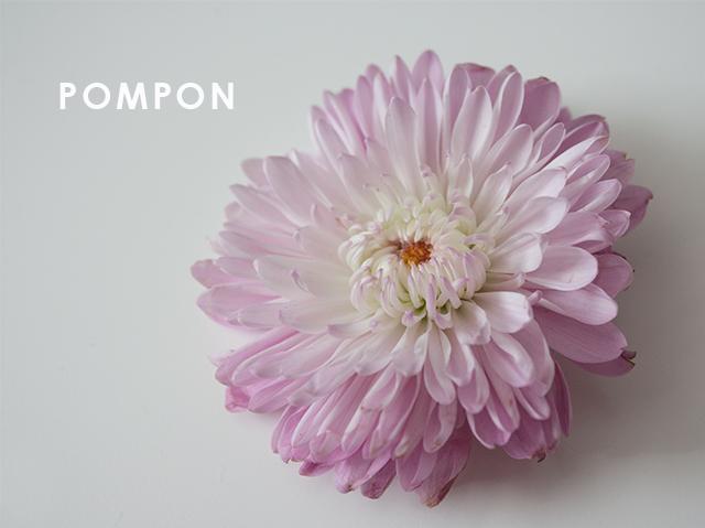 pompon-1