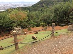 Arashiyama areas