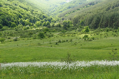 Vitosha meadows