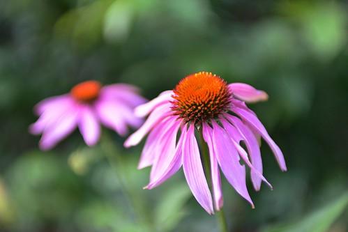 Tech Flower 1