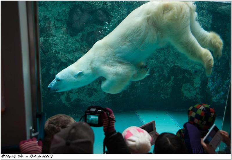 Day5 - 旭山動物園 - 企鵝散步-50