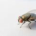 Fly by Julien.Belli