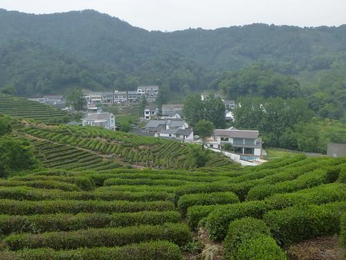 Zhejiang-Hangzhou-Longjing-The (43)
