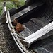 Fawn in Old Boat