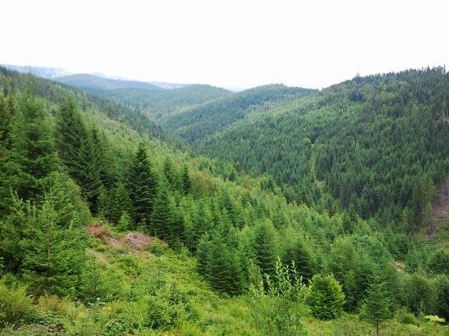 Карпаты, горы и лес