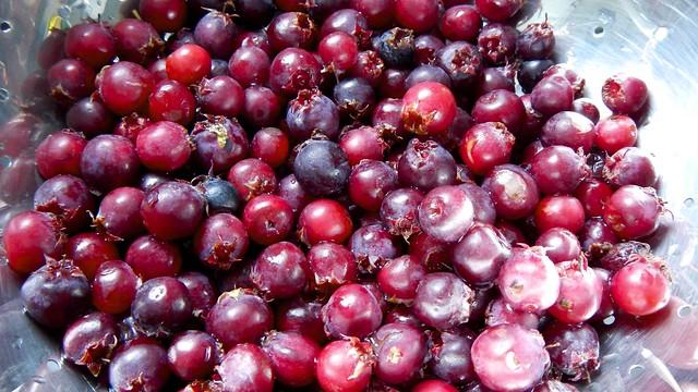 Service Berries 1