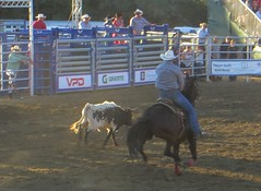 barrel racing(0.0), bull riding(0.0), animal sports(1.0), rodeo(1.0), western riding(1.0), event(1.0), equestrian sport(1.0), sports(1.0), charreada(1.0), reining(1.0),