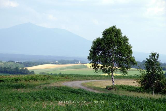 ルベシベの丘1