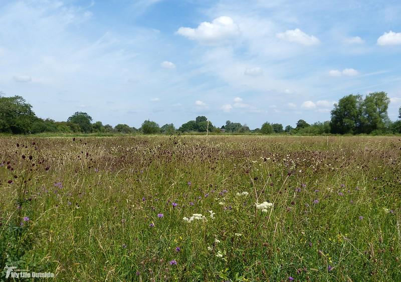 P1080138 - Crickdale North Meadow
