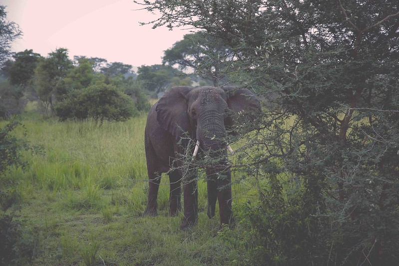 africansafari2014-21