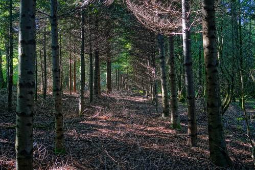 wood fall forest nex nex6