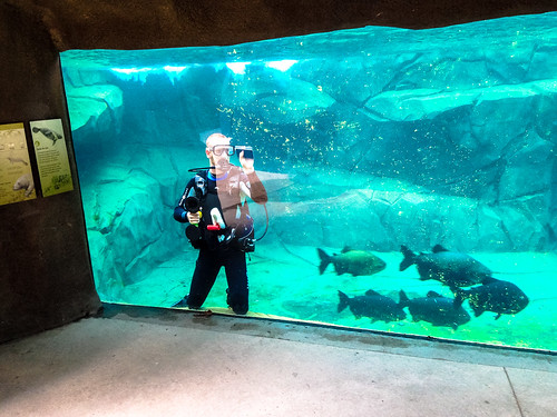 Cleaning the aquarium at Paris Zoo
