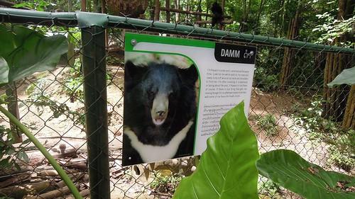 bear park rescue waterfall nikon centre laos province luangprabang 2014 kuangsi p300
