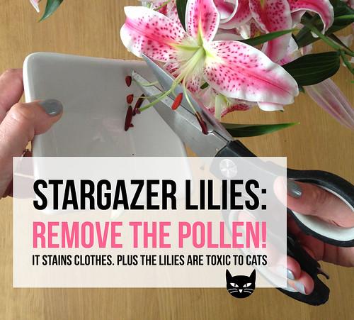 Stargazer lilies: Remove the pollen!