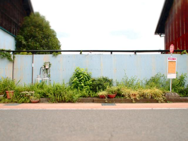 wall +