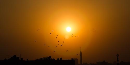 birds cairo azharpark cairotower