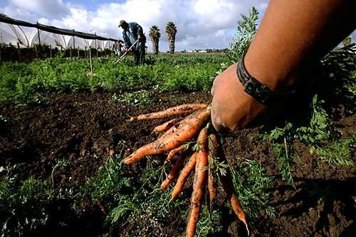 AGRICOLTURA. DOTTORINI: 20 PER CENTO DELLE SUPERFICI AGRICOLE AL BIOLOGICO ENTRO IL 2020, UMBRIA SEGUA ESEMPIO ALTRE REGIONI