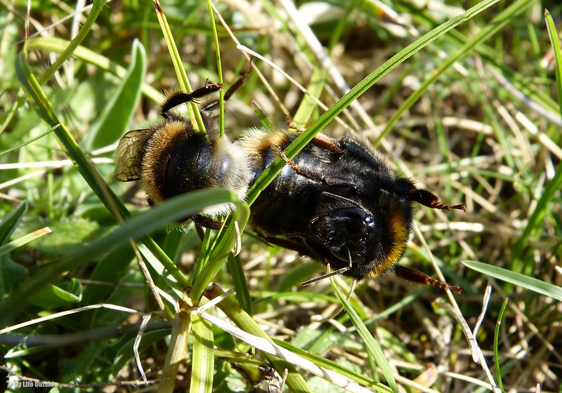 P1080822 - Bees, Whiteford