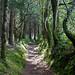 Chemin creux by jfgornet