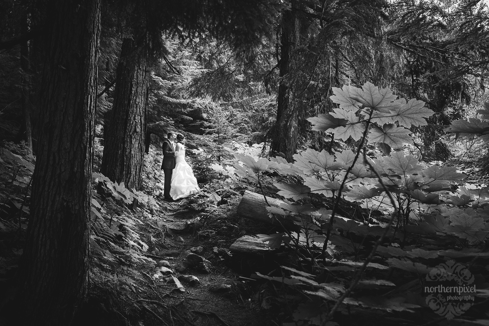 Ancient Forest Wedding Session - British Columbia Wedding Photographer