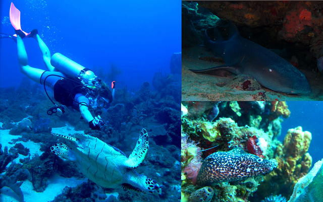 Scuba diving in Dominica
