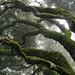 Mt Tamalpais Trees by AGrinberg
