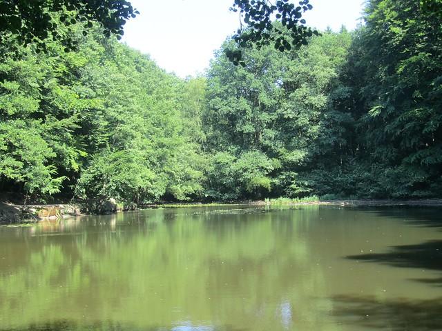 Idyllischer Teich oder trübe Brühe?
