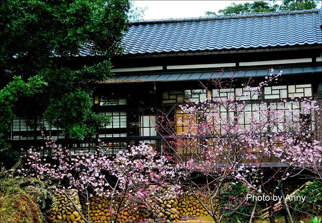 麗池櫻花68